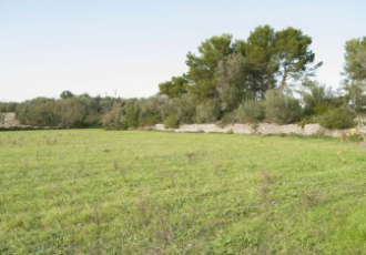 Rustic plot of 66,000 m2 near the Puig de Randa, to build 1320 m2