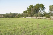 MH16141, Rustic plot of 66,000 m2 near the Puig de Randa, to build 1320 m2